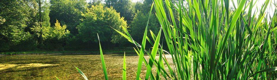 Photo de la forêt de Soignes, tirée du site www.foret-de-soignes.be/
